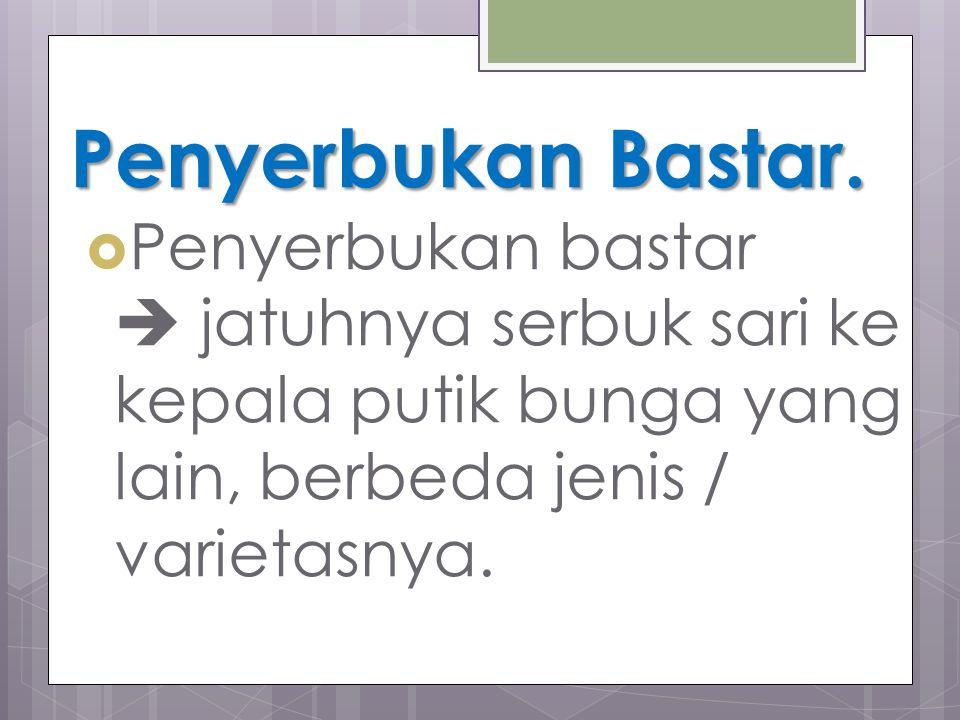 Penyerbukan Bastar.