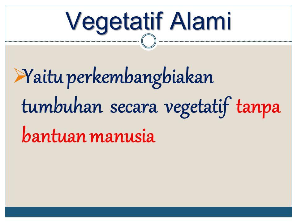 Vegetatif Alami Yaitu perkembangbiakan tumbuhan secara vegetatif tanpa bantuan manusia