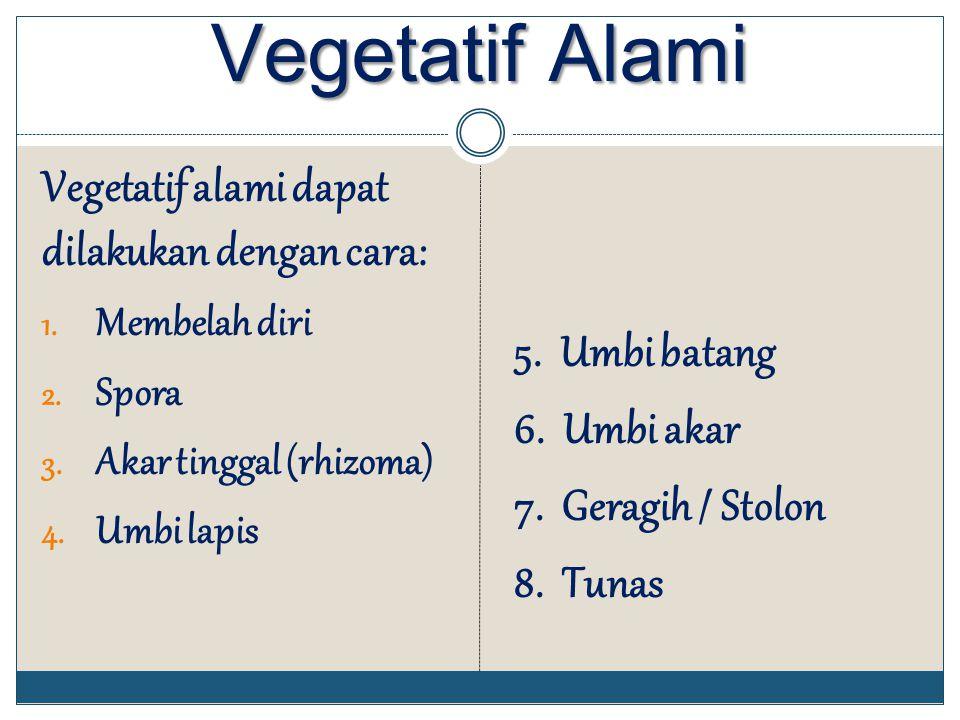 Vegetatif Alami Vegetatif alami dapat dilakukan dengan cara: