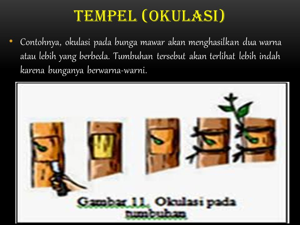 Tempel (okulasi)