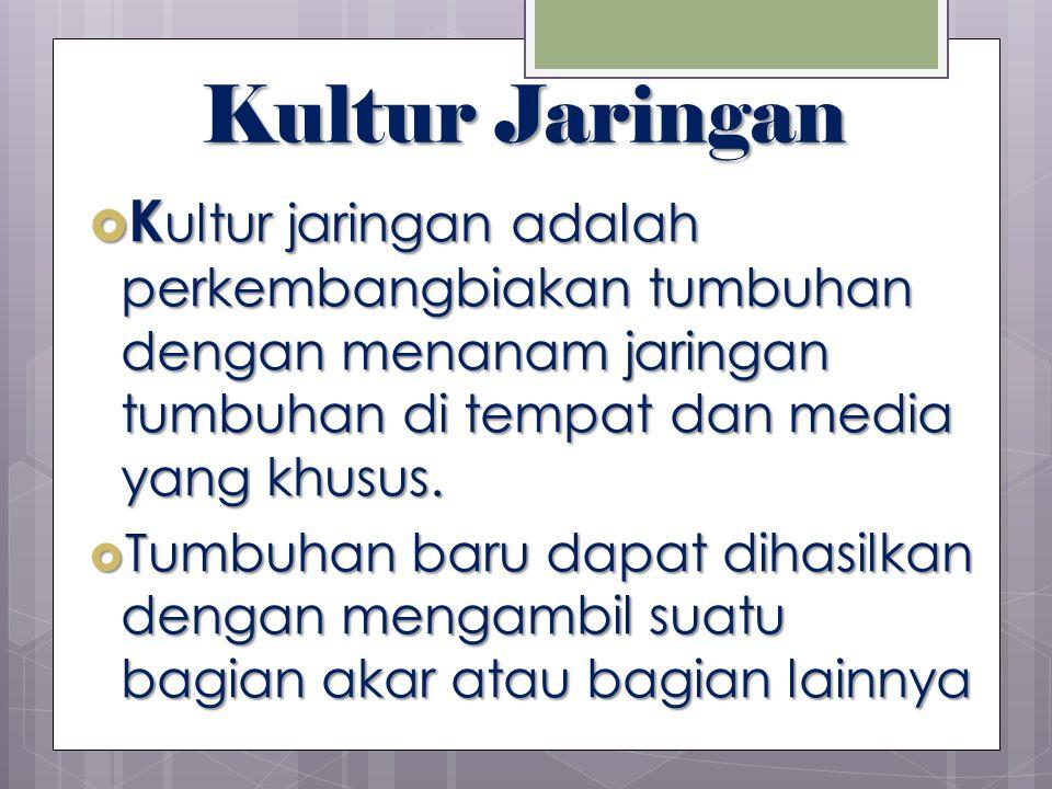 Kultur Jaringan Kultur jaringan adalah perkembangbiakan tumbuhan dengan menanam jaringan tumbuhan di tempat dan media yang khusus.