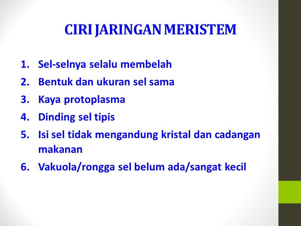 CIRI JARINGAN MERISTEM