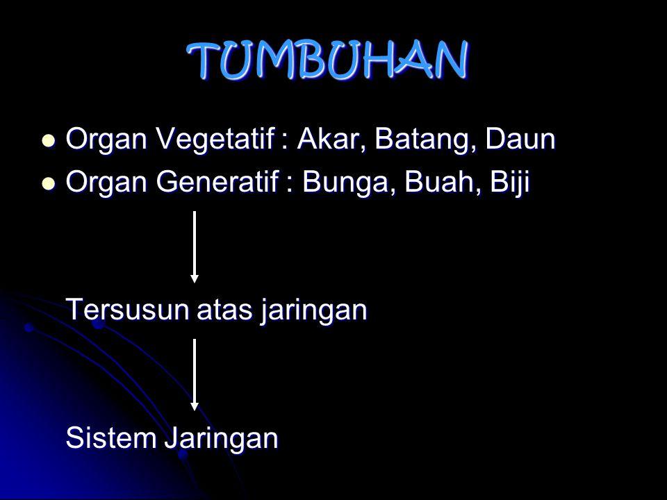 TUMBUHAN Organ Vegetatif : Akar, Batang, Daun