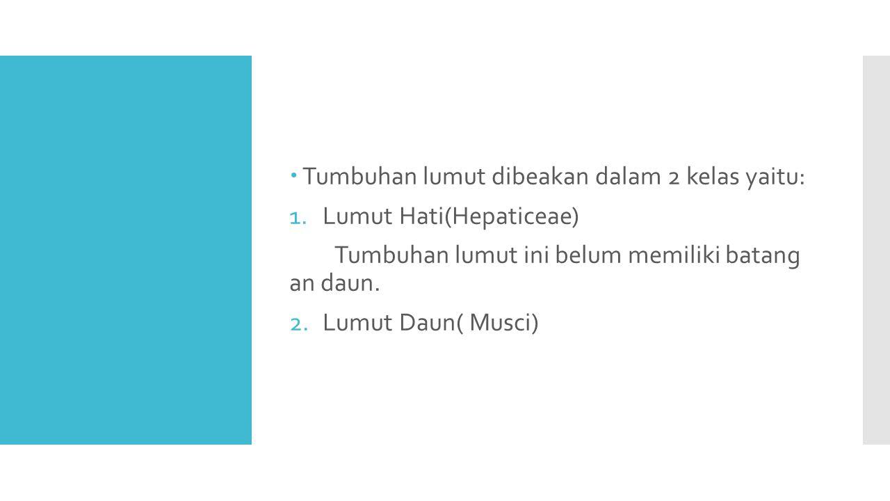 Tumbuhan lumut dibeakan dalam 2 kelas yaitu: