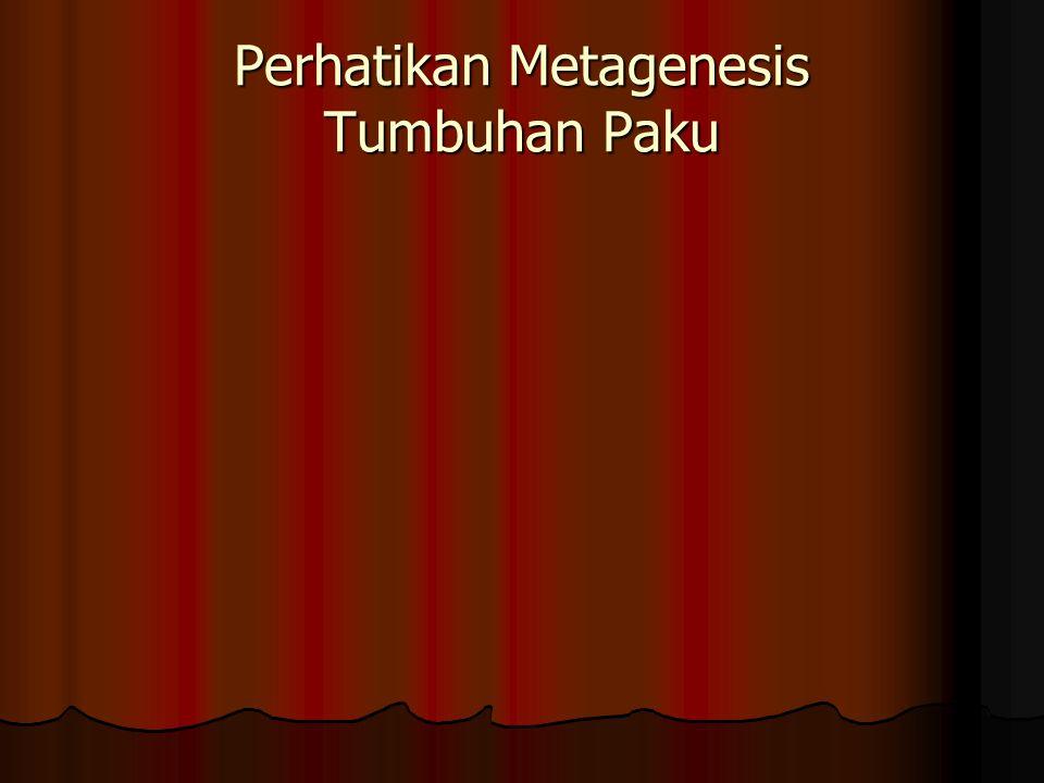Perhatikan Metagenesis Tumbuhan Paku