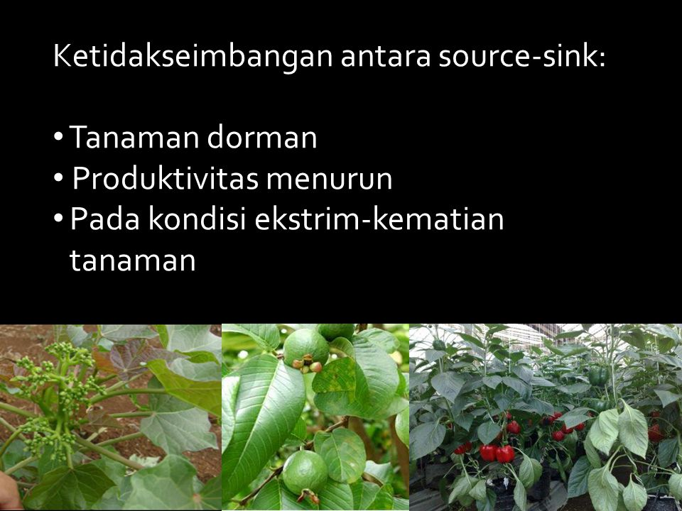 Ketidakseimbangan antara source-sink: