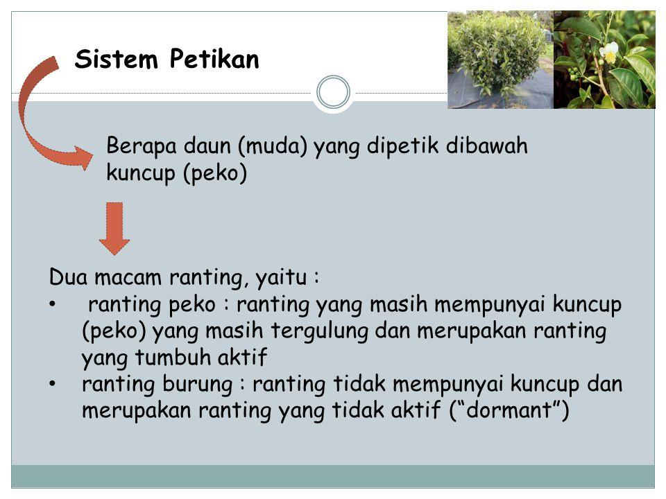Sistem Petikan Berapa daun (muda) yang dipetik dibawah kuncup (peko)