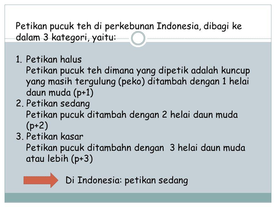 Petikan pucuk teh di perkebunan Indonesia, dibagi ke dalam 3 kategori, yaitu: