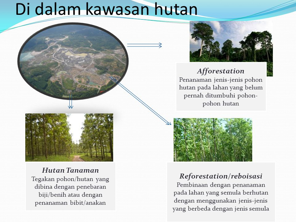 Reforestation/reboisasi