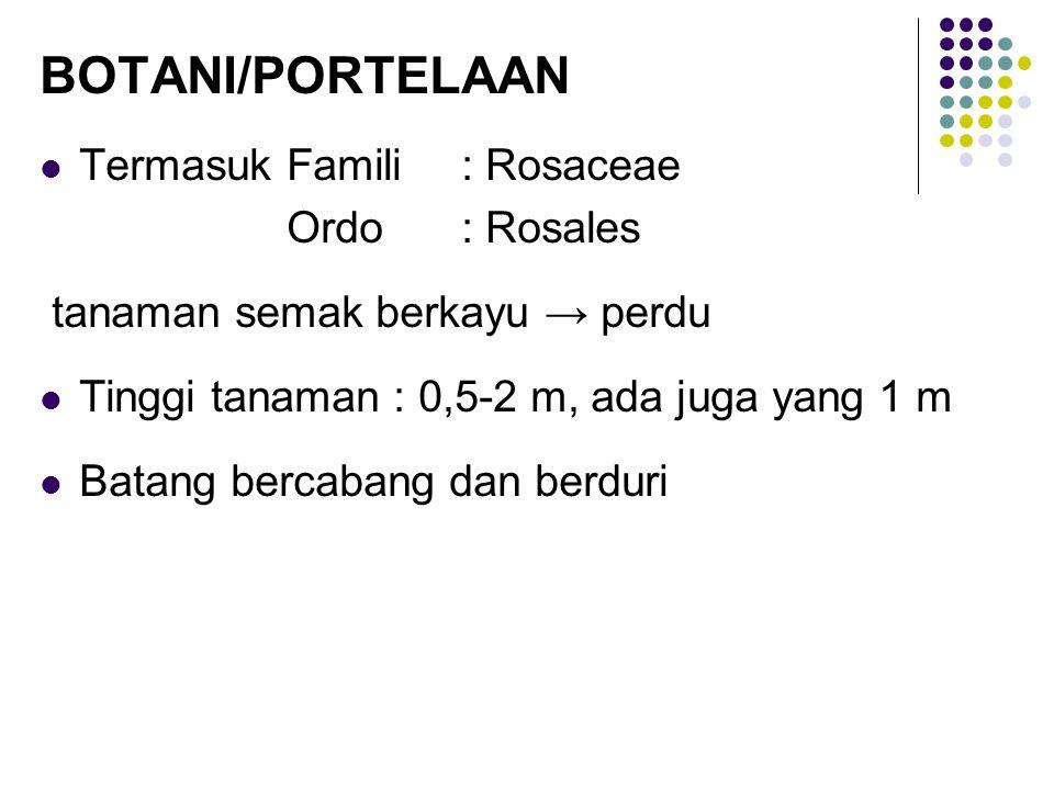 BOTANI/PORTELAAN Termasuk Famili : Rosaceae Ordo : Rosales