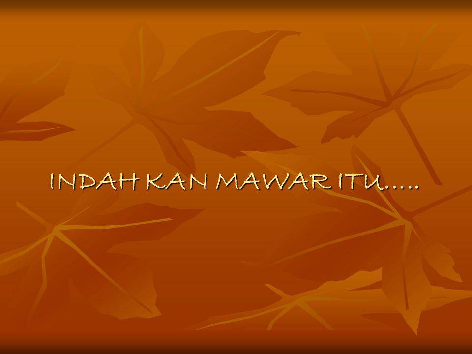 INDAH KAN MAWAR ITU…..