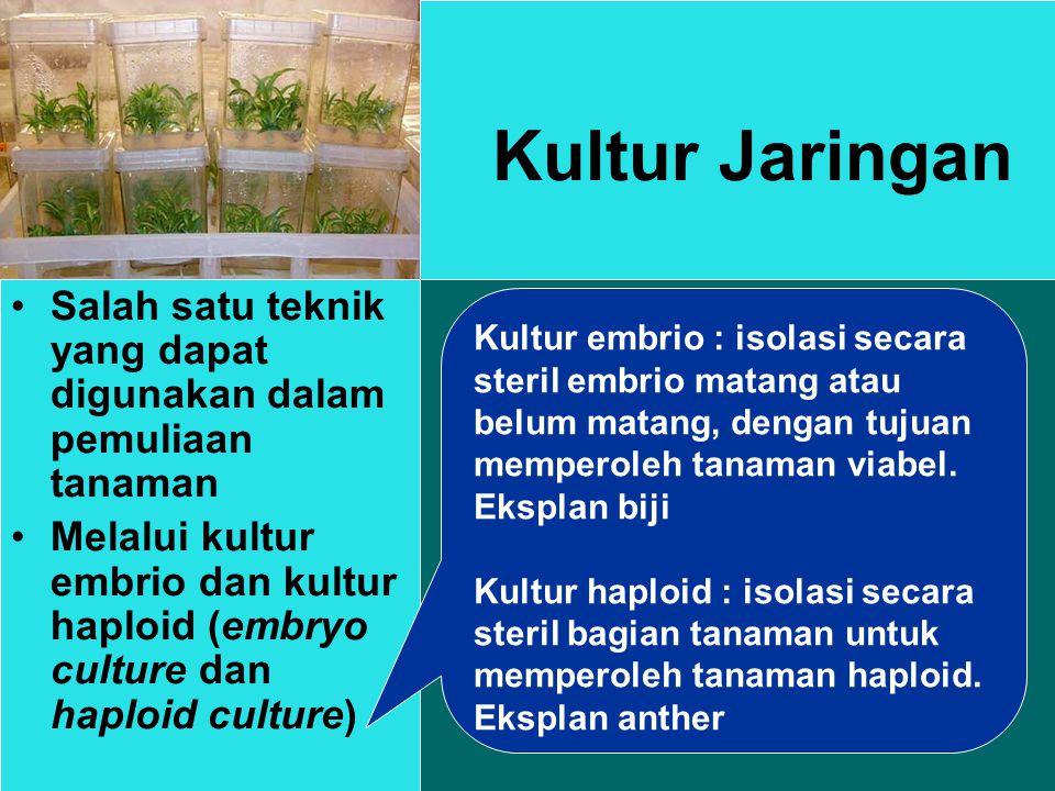 Kultur Jaringan Salah satu teknik yang dapat digunakan dalam pemuliaan tanaman.