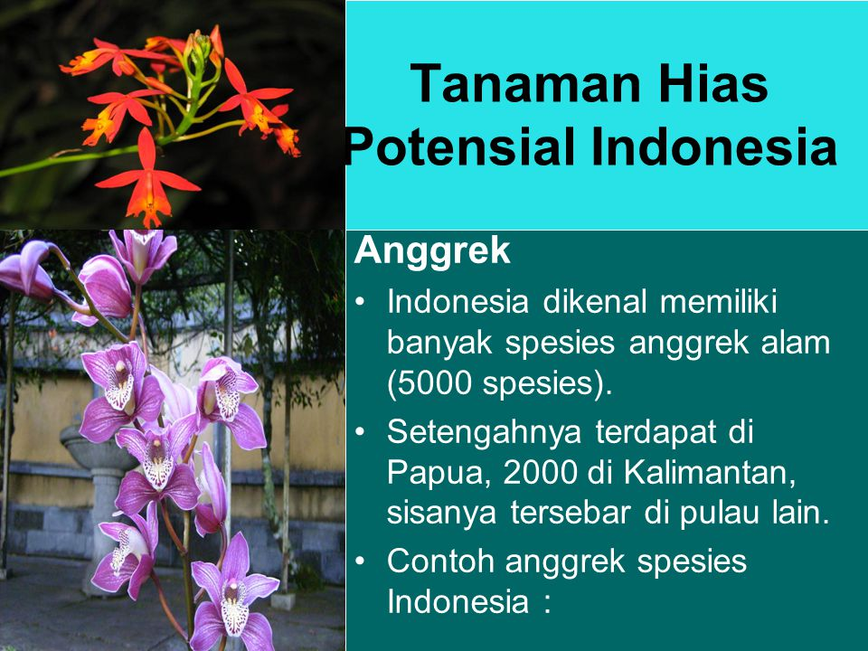 Tanaman Hias Potensial Indonesia