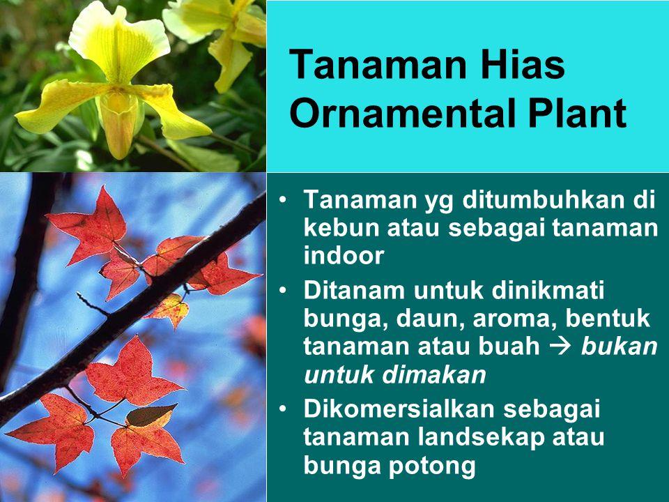 Tanaman Hias Ornamental Plant