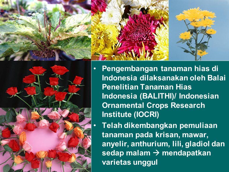 Pengembangan tanaman hias di Indonesia dilaksanakan oleh Balai Penelitian Tanaman Hias Indonesia (BALITHI)/ Indonesian Ornamental Crops Research Institute (IOCRI)
