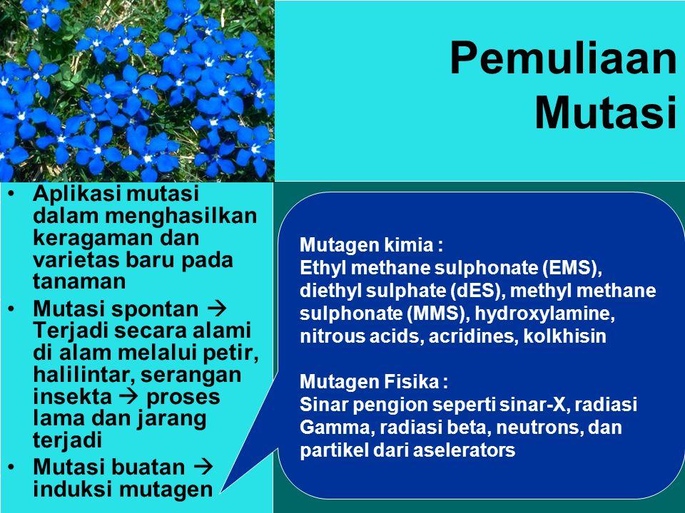 Pemuliaan Mutasi Aplikasi mutasi dalam menghasilkan keragaman dan varietas baru pada tanaman.