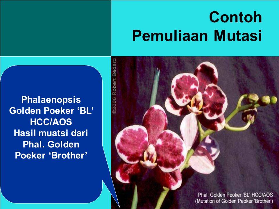 Contoh Pemuliaan Mutasi