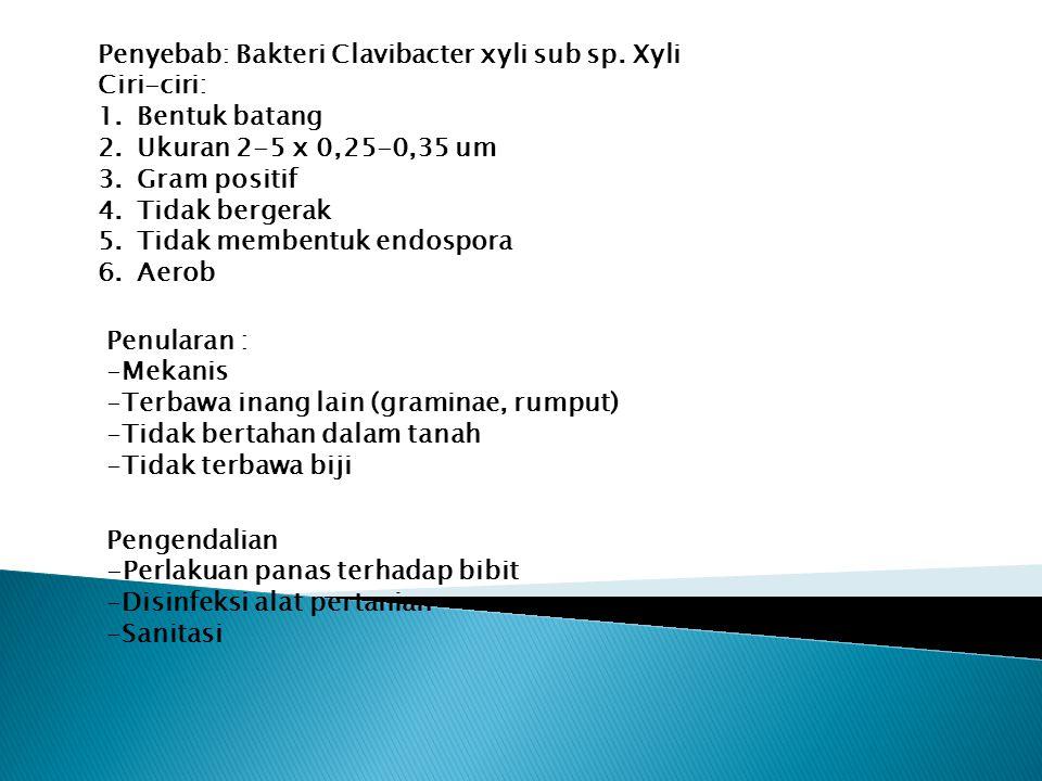 Penyebab: Bakteri Clavibacter xyli sub sp. Xyli