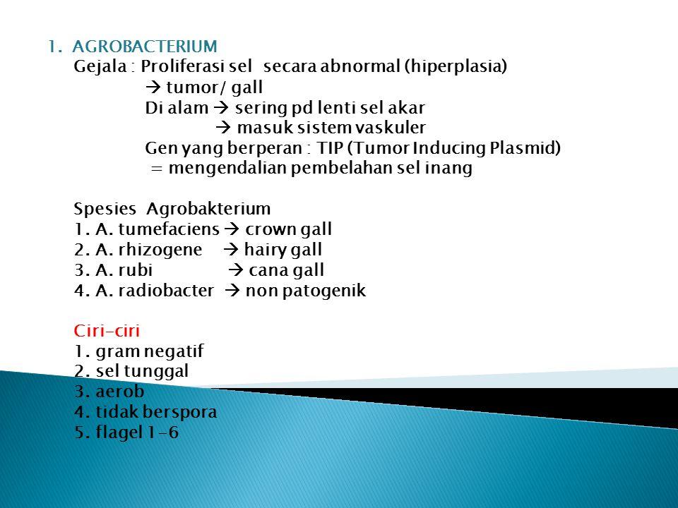AGROBACTERIUM Gejala : Proliferasi sel secara abnormal (hiperplasia)  tumor/ gall. Di alam  sering pd lenti sel akar.