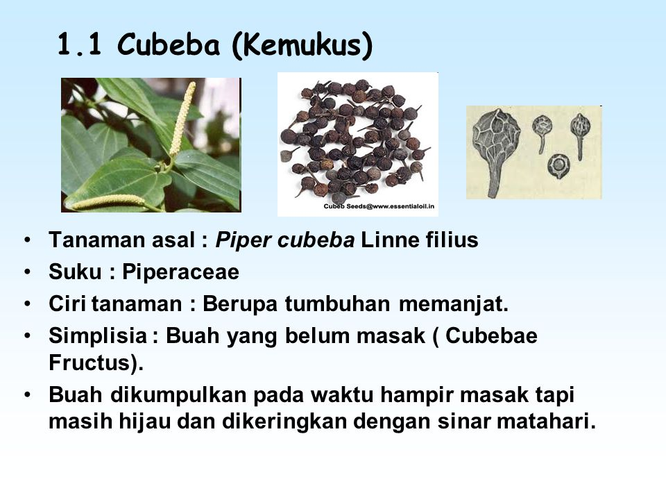 1.1 Cubeba (Kemukus) Tanaman asal : Piper cubeba Linne filius