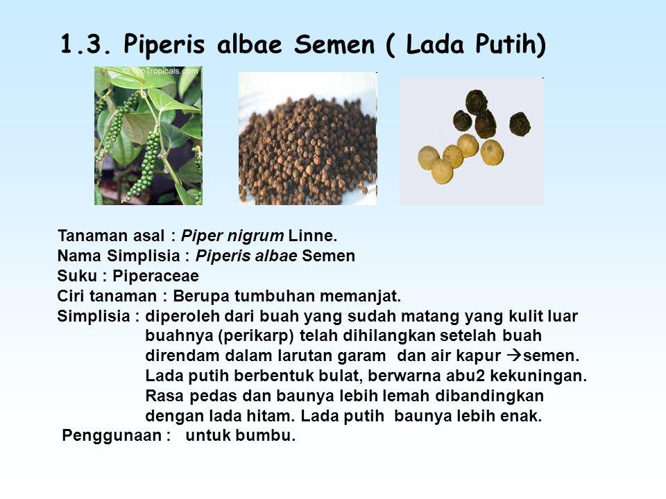 1.3. Piperis albae Semen ( Lada Putih)