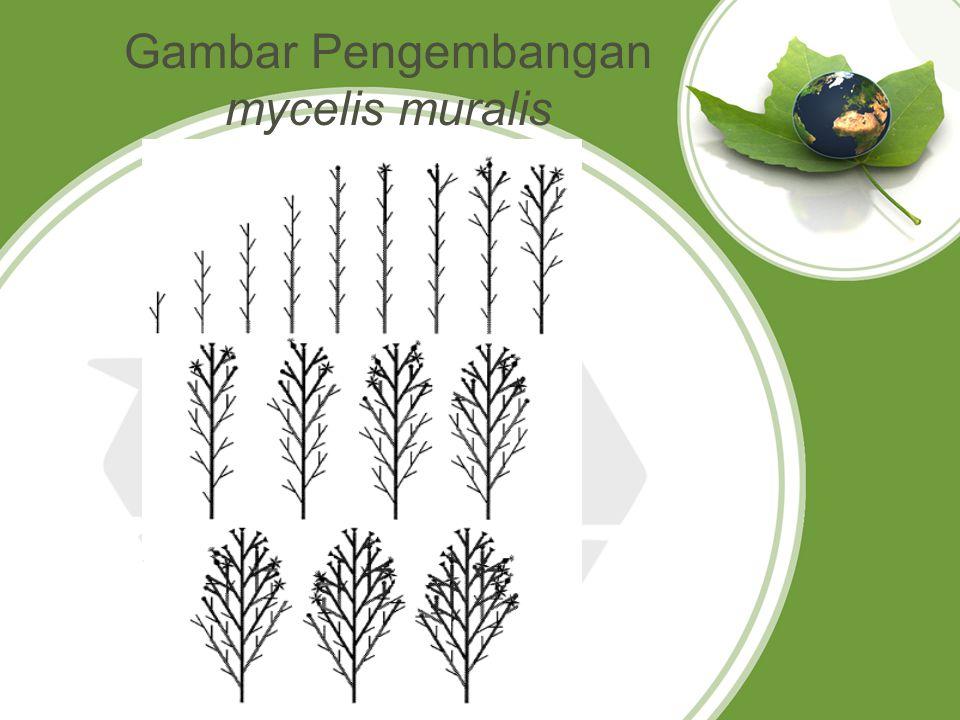 Gambar Pengembangan mycelis muralis