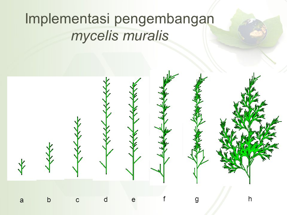 Implementasi pengembangan mycelis muralis