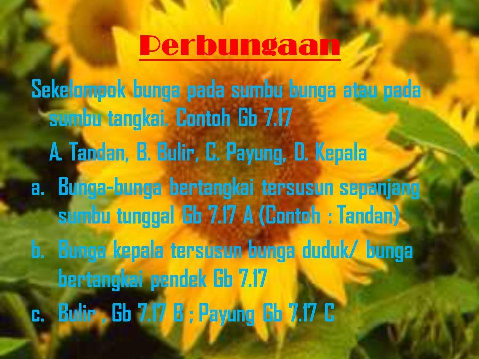 Perbungaan Sekelompok bunga pada sumbu bunga atau pada sumbu tangkai. Contoh Gb 7.17. A. Tandan, B. Bulir, C. Payung, D. Kepala.