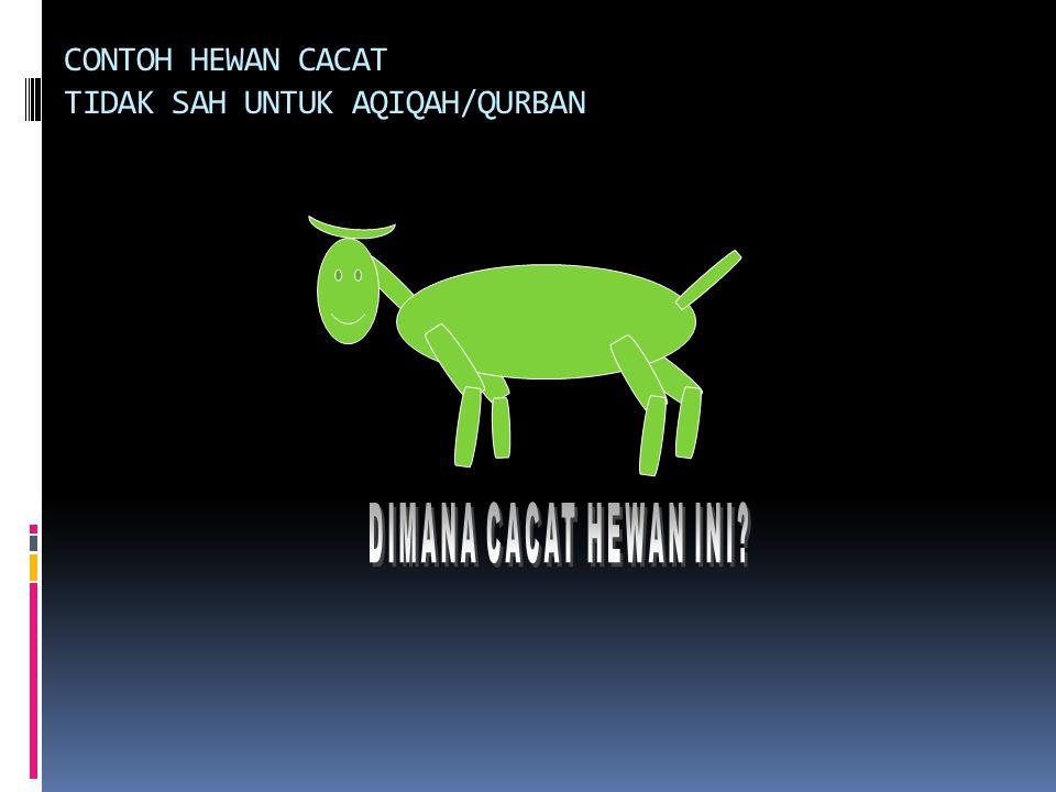 CONTOH HEWAN CACAT TIDAK SAH UNTUK AQIQAH/QURBAN