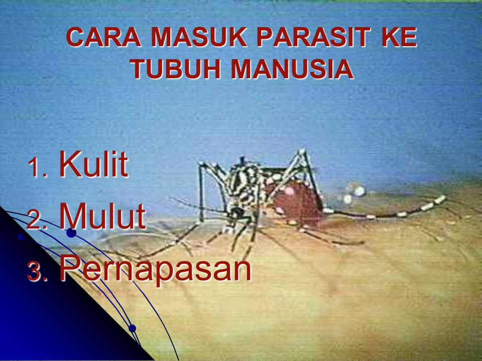 CARA MASUK PARASIT KE TUBUH MANUSIA