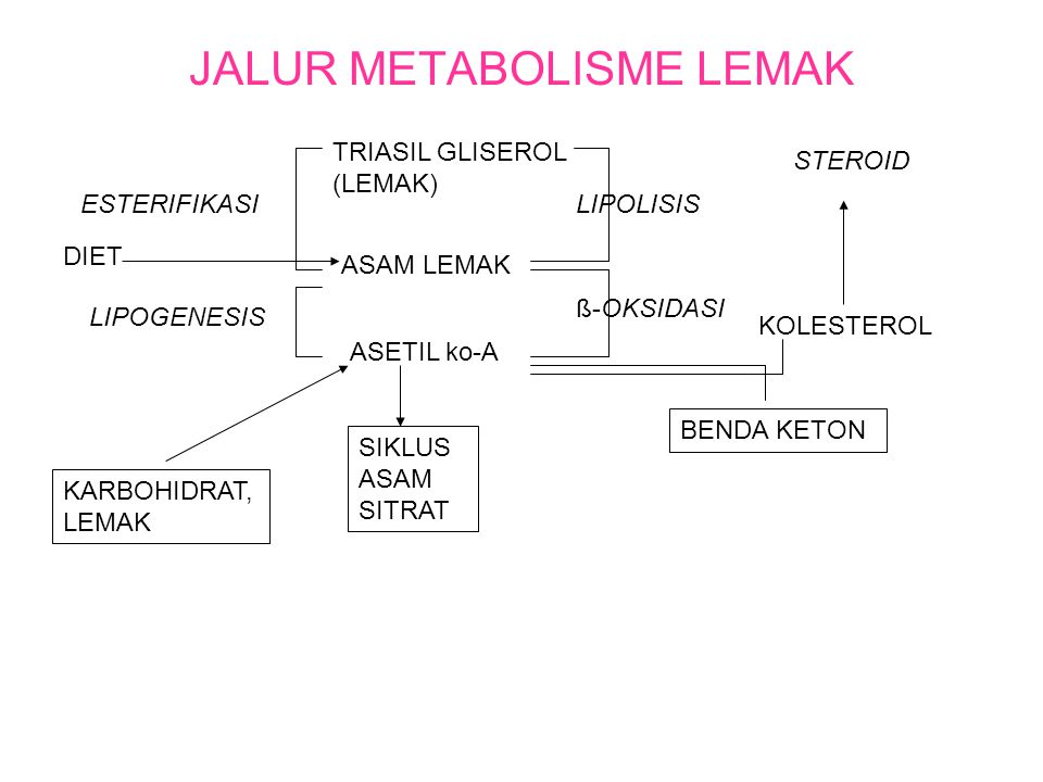JALUR METABOLISME LEMAK
