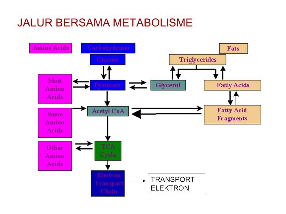 JALUR BERSAMA METABOLISME