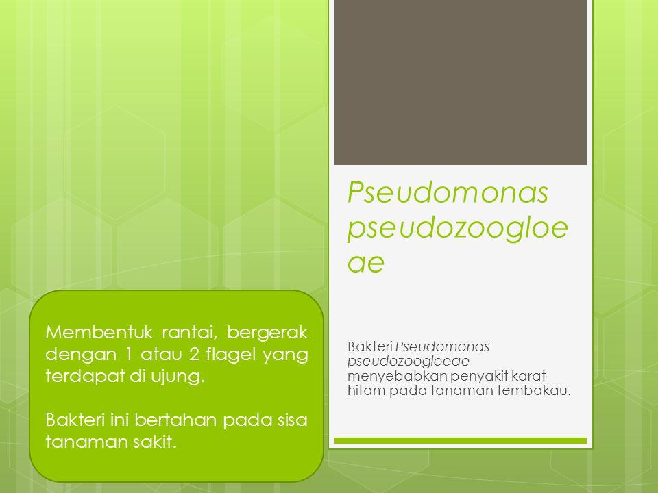 Pseudomonas pseudozoogloeae