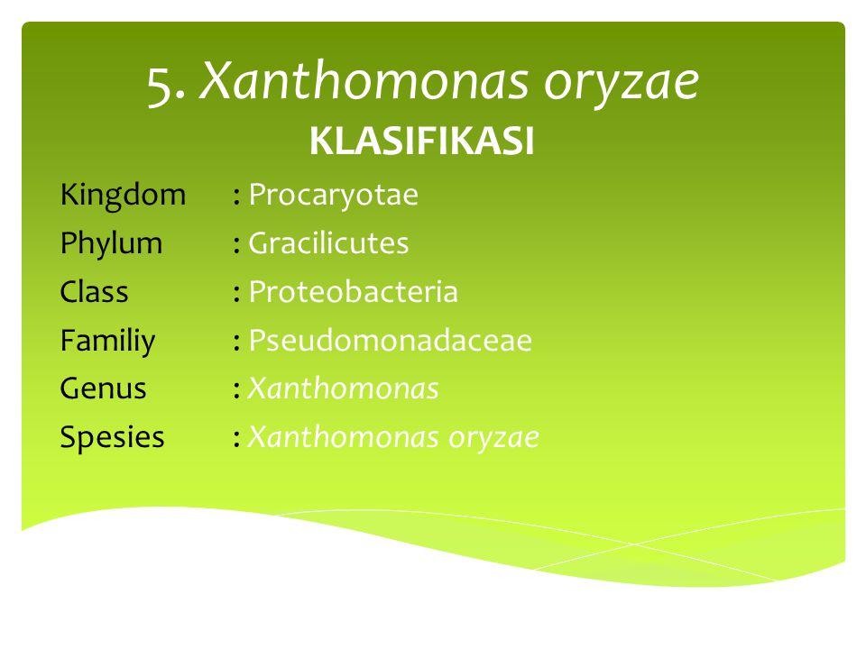 5. Xanthomonas oryzae KLASIFIKASI