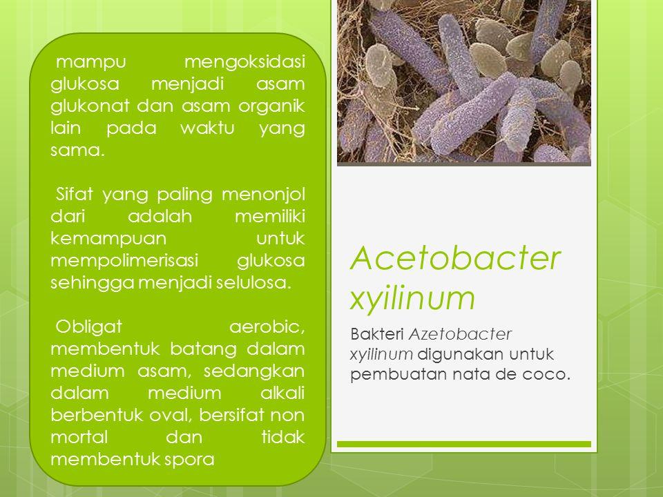 Bakteri Azetobacter xyilinum digunakan untuk pembuatan nata de coco.