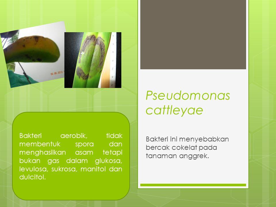 Pseudomonas cattleyae