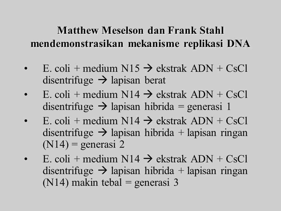 Matthew Meselson dan Frank Stahl mendemonstrasikan mekanisme replikasi DNA