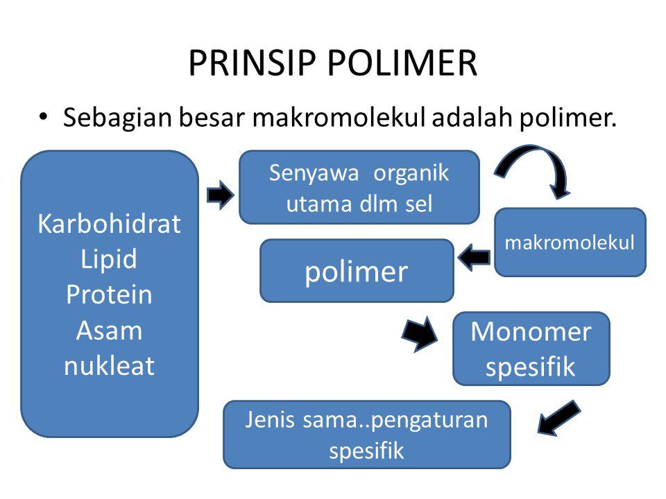 PRINSIP POLIMER polimer Sebagian besar makromolekul adalah polimer.