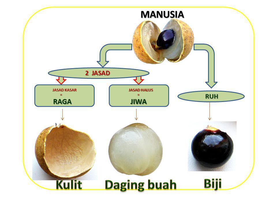 Kulit Daging buah Biji MANUSIA RAGA JIWA 2 JASAD RUH JASAD KASAR