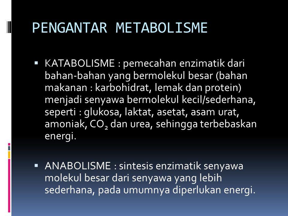 PENGANTAR METABOLISME
