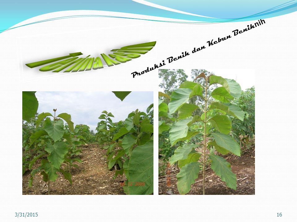 Terima Kasih Produksi Benih dan Kebun Benihnih 4/8/2017