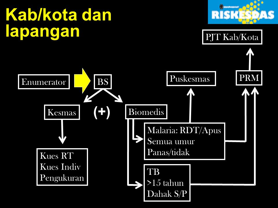 Kab/kota dan lapangan (+) PJT Kab/Kota Puskesmas PRM Enumerator BS