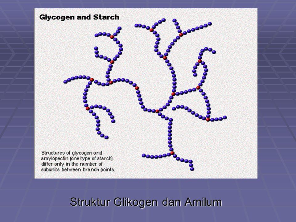 Struktur Glikogen dan Amilum