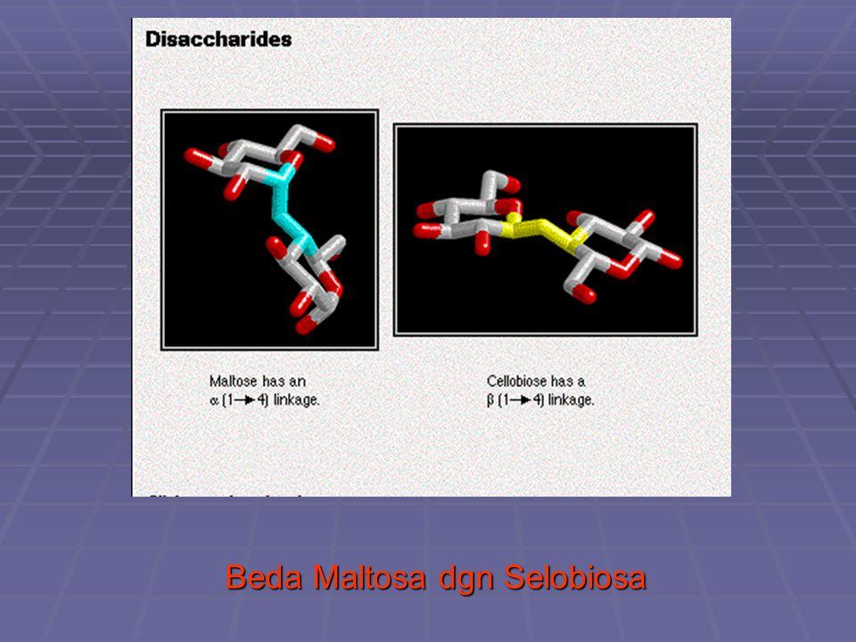 Beda Maltosa dgn Selobiosa