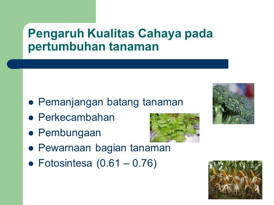 Pengaruh Kualitas Cahaya pada pertumbuhan tanaman