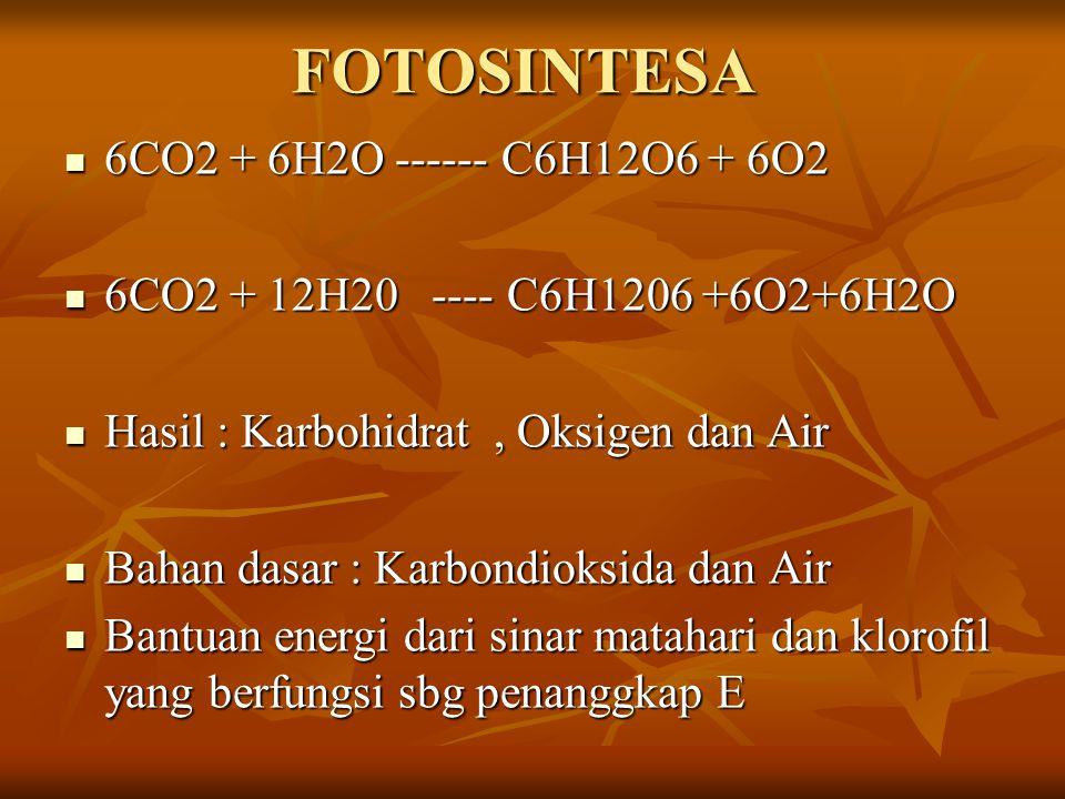 FOTOSINTESA 6CO2 + 6H2O ------ C6H12O6 + 6O2