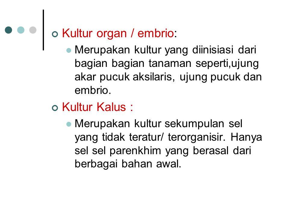 Kultur organ / embrio: Kultur Kalus :