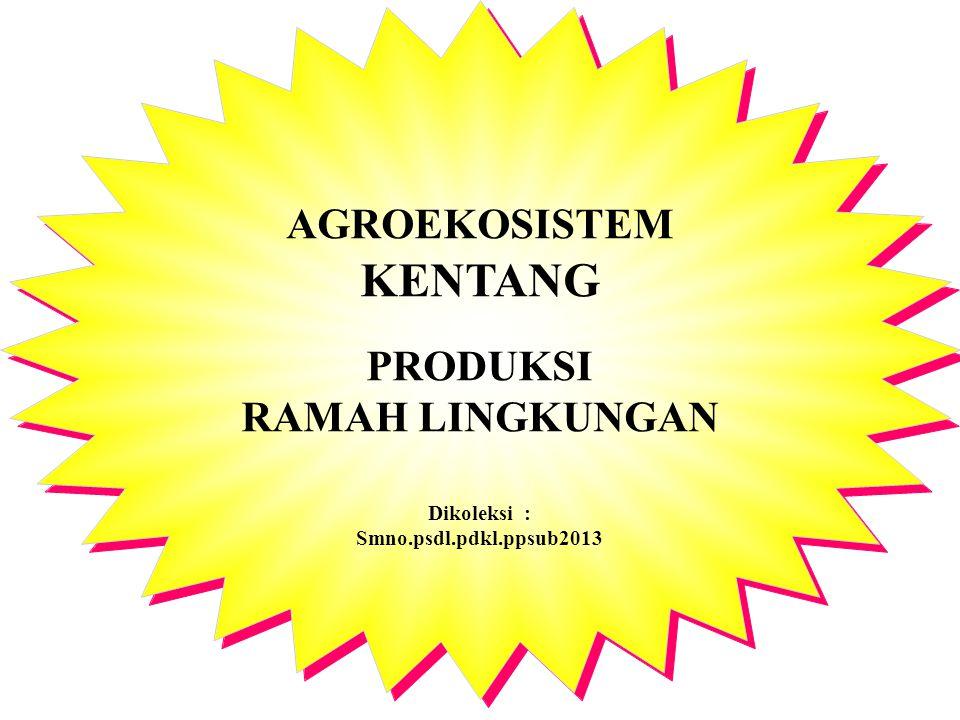 AGROEKOSISTEM KENTANG