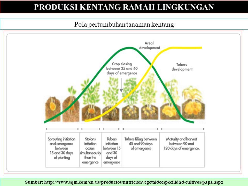 PRODUKSI KENTANG RAMAH LINGKUNGAN