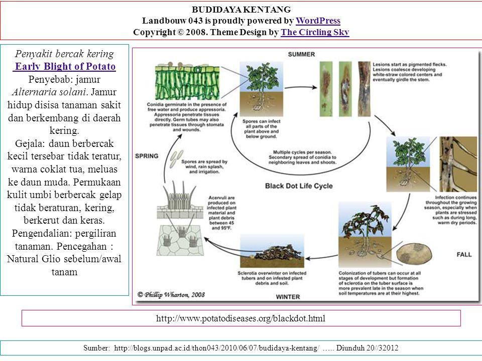 BUDIDAYA KENTANG Landbouw 043 is proudly powered by WordPress Copyright © 2008. Theme Design by The Circling Sky.